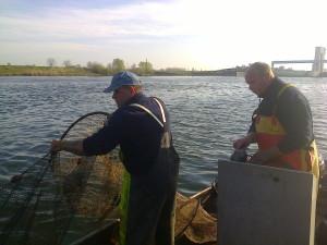zeeprik rivierprik visserij service nederland