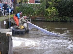 Vismigratie Visserij Service Nederland